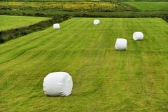 Rolled silage bales in the meadow. At Iceland Stock Photography