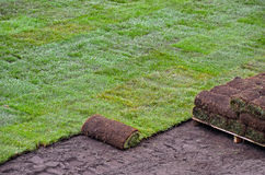 Rolled sod for lawn. Rolled sod for new lawn stock photo