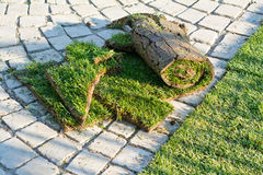 Rolled sod Stock Image