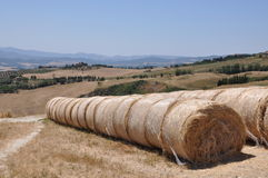 Rolled straw after the harvest Stock Images