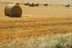 Rolled straw after harvesting Stock Images