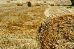 Rolled straw after harvesting Royalty Free Stock Photography