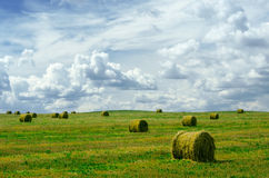 Rolled straw Stock Images