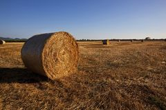 Rolled straw at the summer field Stock Image