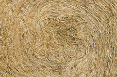 Rolled up hay Royalty Free Stock Image