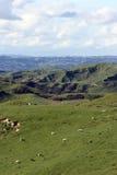 Rollen-Ackerland mit blauem Himmel und weißen Wolken Lizenzfreies Stockbild