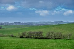 Rollende Ayrshire-Rind Felder in Schottland, da der Regen gesehenes Kommen über die Bäume im dunstigen Abstand ist stockfotografie
