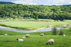 Rollende englische Landwirtschaftslandschaft Stockbild