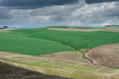 Rollende Felder gepflanzt im Weizen Stockfotografie