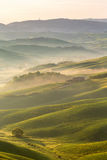 Rollende Felder mit Nebel Lizenzfreies Stockbild
