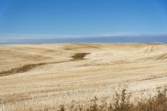 Rollende goldene Hügel des Ackerlands in Washington State Lizenzfreie Stockfotos
