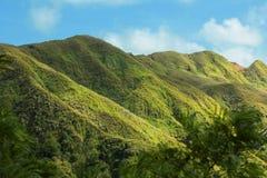 Rollende grüne Hügel Stockfotografie