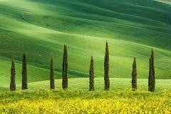 Rollende Wiesen und Felder in Toskana, Italien Lizenzfreie Stockfotos