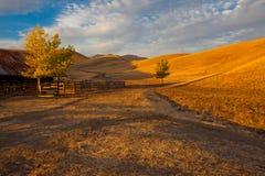 Rollendes goldenes HügelAckerland Stockbilder