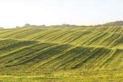 Rollendes grasartiges Feld Stockbild