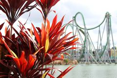 Roller Coaster with Flowers in Foreground Royalty Free Stock Images