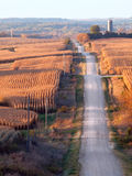 Roller Coaster Road. Rural landscape with corn fields, rolling hills, and a gravel road (vertical Royalty Free Stock Photos