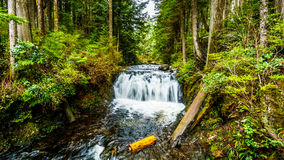Rolley supérieur tombe dans la forêt tropicale tempérée du parc provincial de lac Rolley image stock