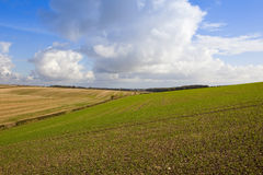 Rolling agricultural landscape Stock Photo