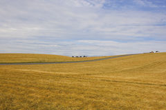 Rolling barley fields Stock Images