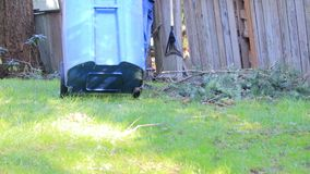 Rolling a blue trash can out to yard. To clean fallen branches stock video