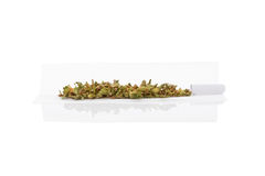 Rolling a cannabis joint. Marijuana bud and cigarette rolling paper on white background. Smoking cannabis, addiction or medical use royalty free stock photo