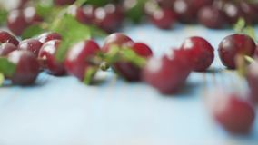 Rolling cherries on blue wooden table, close-up slow motion shot. Rolling cherries on blue table stock footage