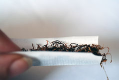 Rolling a Cigarette. A close-up of a cigarette being rolled Stock Image