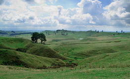 Rolling countryside in New Zealand Royalty Free Stock Photos