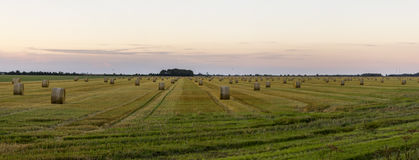 The rolling crops Royalty Free Stock Photo