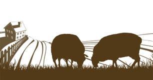 Rolling de Heuvelslandschap van het schapenlandbouwbedrijf Stock Foto's