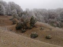 Rolling de koude van het heuvelslandschap en berijpt Stock Afbeelding