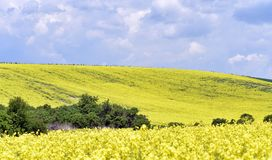 Rolling de zomerlandschap van Moravië Royalty-vrije Stock Afbeeldingen