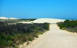 Rolling Dunes & Dirt Track, Eyre Peninsula. Rolling sand dunes at the entrance to the Port Lincoln National Park, Eyre Peninsula (Australia Royalty Free Stock Photo