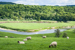 Rolling English Farming Countryside. Rolling English countryside farmland, with a river and grazing sheep. Ironbridge, Shropshire, England Stock Image