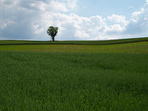 Rolling Farmland with Tree Royalty Free Stock Photography