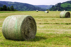 Rolling field stacks Stock Photo