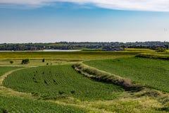 Rolling field of Young corn field somewhere in Omaha Nebraska Stock Photo
