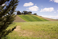 Rolling Fields, Chianti Stock Image