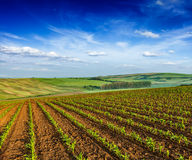 Rolling fields of Moravia Stock Images