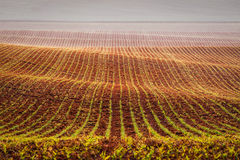 Rolling fields of Moravia Stock Photos
