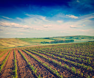 Rolling fields of Moravia Royalty Free Stock Photos