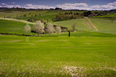 Rolling Fields, Tuscany Stock Photography