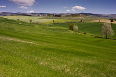 Rolling Fields, Tuscany Royalty Free Stock Photography