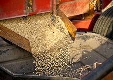 Rolling Gold. Golden soybeans flowing out of the grain box into the auger Stock Photos