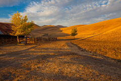 Rolling golden hills farm land Stock Images