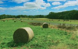 Rolling grass stock photo