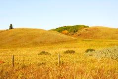 Rolling grassland Royalty Free Stock Photos