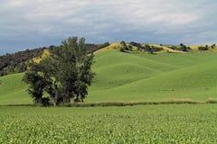 Rolling Green Farm Fields Stock Photography