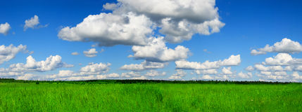 Rolling Green Field Panorama Stock Image